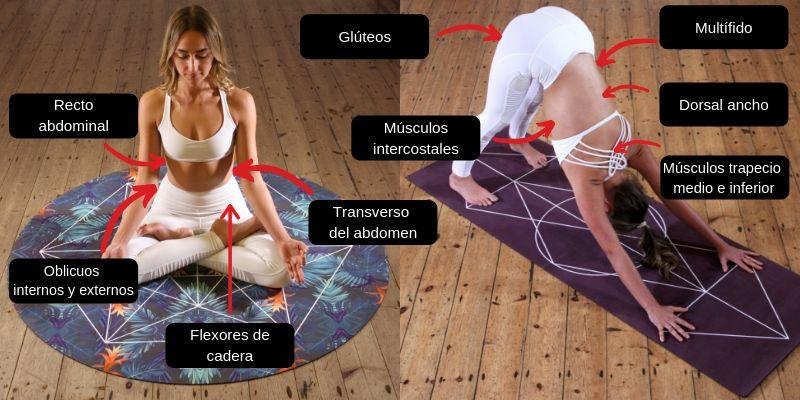 como entrenar los músculos del abdomen de forma correcta