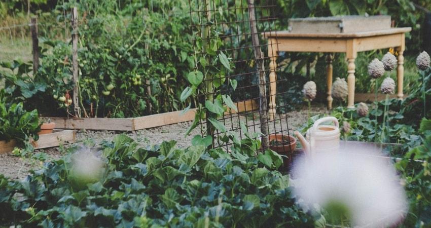Iniciar una alimentacion sustentable