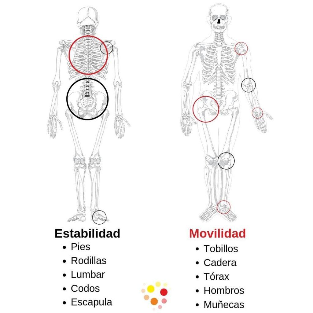 Movilidad y estabilidad como resolver un dolor articular