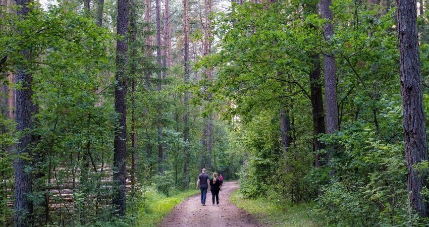 Caminar alrededor de Brno